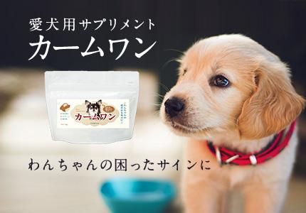 人気ブランドが開発した犬用サプリメントのランディングページを制作
